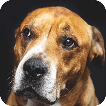 dog-small-1