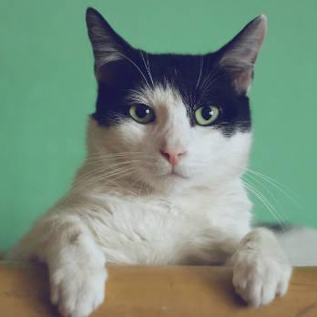 edgar-cat